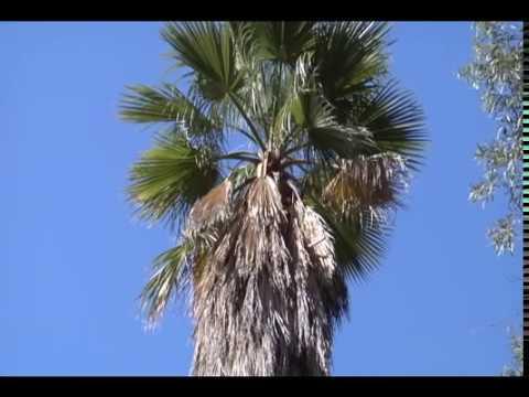 Importance of the Palm Beard - Prune Like a Pro