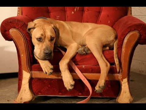 Dogs alone at Home - if the Owner leave the Home.