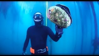 """Harbor House Life: 10"""" Abalone Diving"""