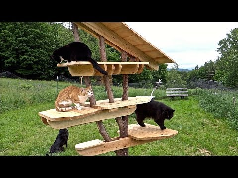 Cat Tree - building a multilevel cat entertainment center