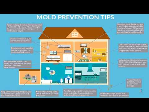 How To Prevent Mold in Your Home: Proven Mold Prevention Tips for  Homes
