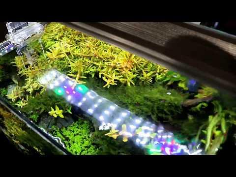 $28 ADA Style LED Aquarium Light Review -- Better than Finnex or Twinstar?