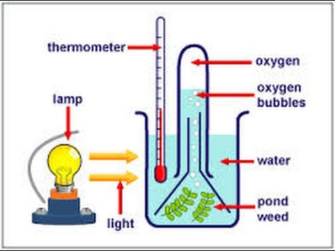 To prove that oxygen is produced during photosynthesis