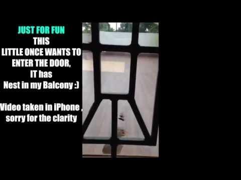 Funny Bird wants to enter closed Glass Door