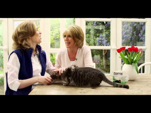 How to apply FRONTLINE® Spot On to cats
