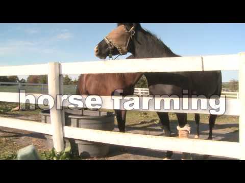 kentucky horses-horse fencing