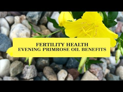 Fertility Health   Evening Primrose Oil Benefits