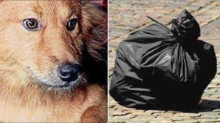 Köpeğinin Eve Bir Çöp Poşeti Getirdiğini Gören Adam İçindekini Görünce Şok Oldu!
