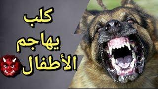 كلبي يهاجم الأطفال 👹🔥mon chien attaque les enfants