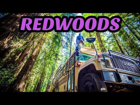 Will a Skoolie fit through a redwood tree? | Redwoods National Park | Banana Slug