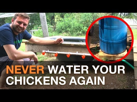 🔨  🐓 I Made An Automatic Chicken Watering System Gravity Fed From a Rain Barrel 💦