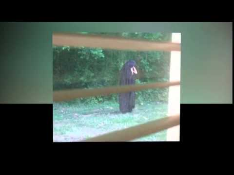 Town Spooked By Man Dressed In A Cloak Dropping Raw Meat In Playgrounds