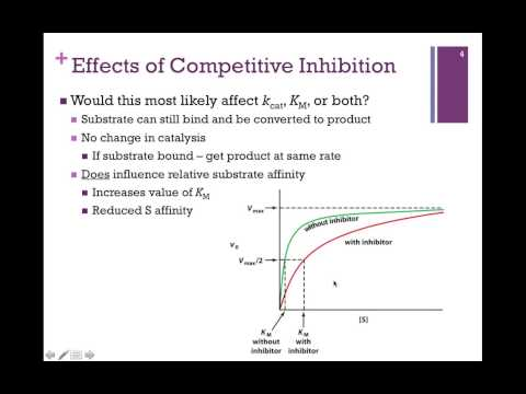 049-Competitive Inhibition