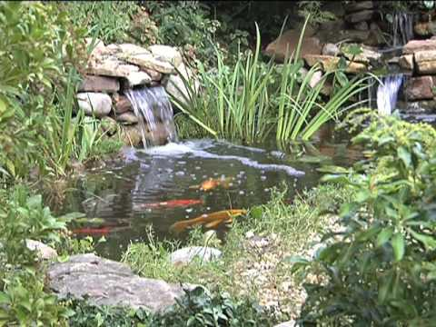 Ponds, Watergardens & Waterfalls: Chapter 7 Plants, Fish and Water Care