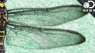Shredding Bacteria With Technology From Insect Wings