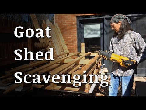 Scavenging for a Goat Shelter