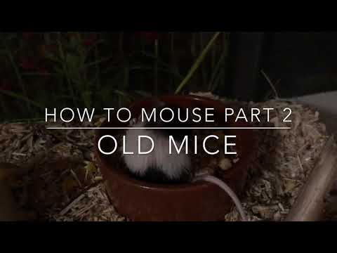 How To Mouse Part 2 | Old Mice