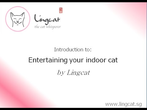 Lingcat - Keeping your indoor cats entertained