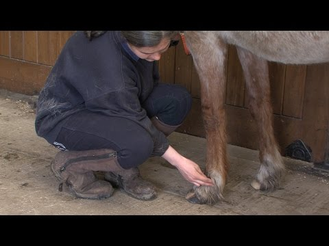 How to take a horse's pulse
