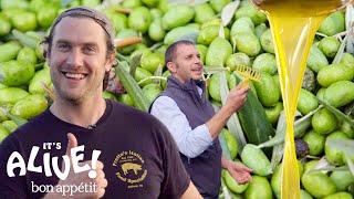 Brad Makes Olive Oil (In Italy!) | It