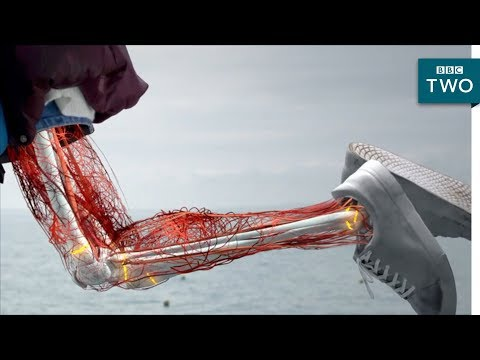 The secret behind long bone growth - The Human Body: Secrets of Your Life Revealed - Grow   BBC Two