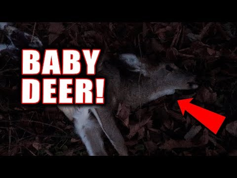 Don't be this Guy... Baby Deer Found While Fishing