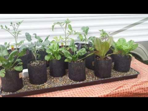 Incredible Automatic Self Watering Grow Bag Garden System