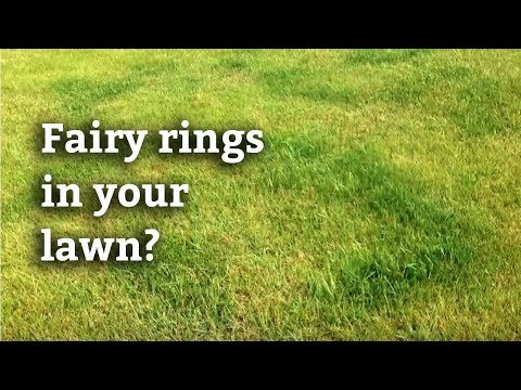 Fairy Ring - Expert Lawn Care Tips