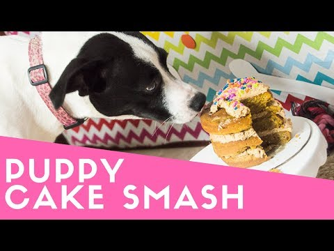 Puppy CAKE SMASH   The Starving Chef