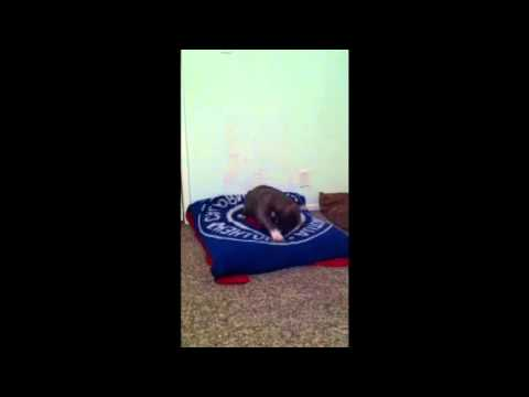 How to get your puppy to fall asleep