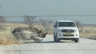 Maiores ataques de animais selvagens - Mais Curiosidades