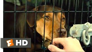 A Dog's Way Home (2018) - Goodbye, Bella Scene (1/10)   Movieclips