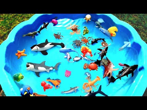 Box Of Toys Learn Sea Animal Names Learn Colors With Shark Ocean Creature Beach Toys For Kids
