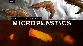 How to find the microplastics in your seafood