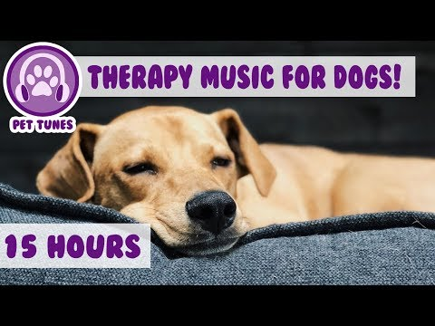 How to Relax my Dog in my House! New Calming Music Has Helped Over 4 Million Pets - Pet Therapy