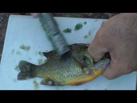 How to fillet a very small panfish