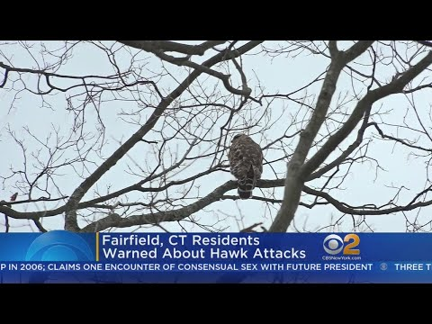 Fairfield, CT Residents Warned About Hawk Attacks