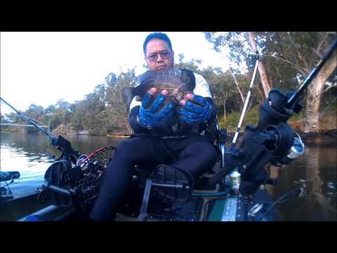 Swan River Kayak Fishing for Black Breams
