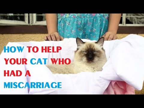 How to Help Your Cat Who Had a Miscarriage