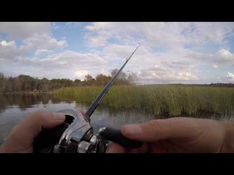 Frog Fishing for Bass in Winter?