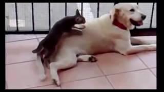 Funny Animals 2017