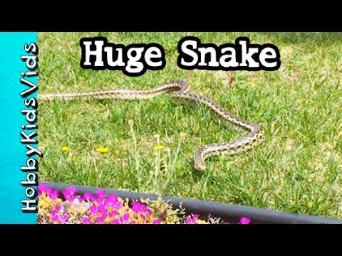 Long SCARY Garden SNAKE Found in Yard! Can We Catch It? HobbyKidsVids