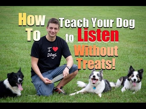 How to Get your Dog to Listen Without Treats