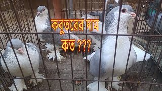 Pigeon price HD Mp4 Download Videos - MobVidz