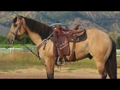 BUCKSKIN HEEL HORSE 5 YEAR OLD AQHA GELDING 15.1 HANDS TALL