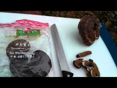 Fountain of Youth - The Reishi or Lingzhi Mushroom  - Making Tea