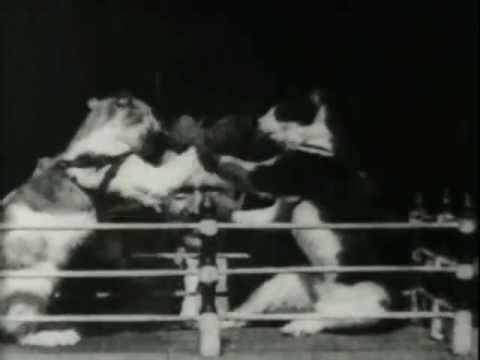 The Oldest Cat Video on YouTube: 1894 Boxing Cats