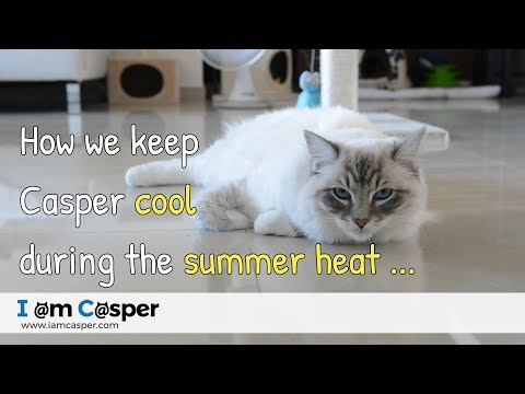 How we keep our cat Casper cool during the summer heat