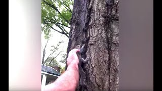 Ozzy Man Reviews: Squirrel Rescue [Gone Wrong]