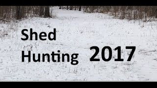 Shed Hunting 2017 - Part 1